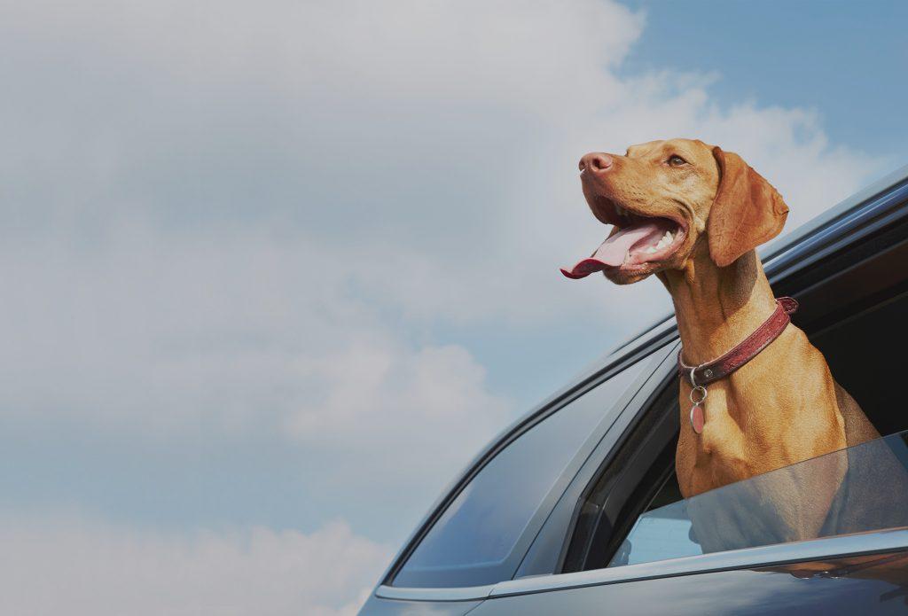 http://ledogclub.ca/wp-content/themes/dogclubSERVICE DE TAXI ANIMALIER
