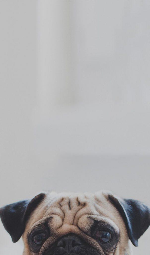 LE DOG CLUB : PENSION POUR CHIENS ET CHATS PRÈS DE MONTRÉAL